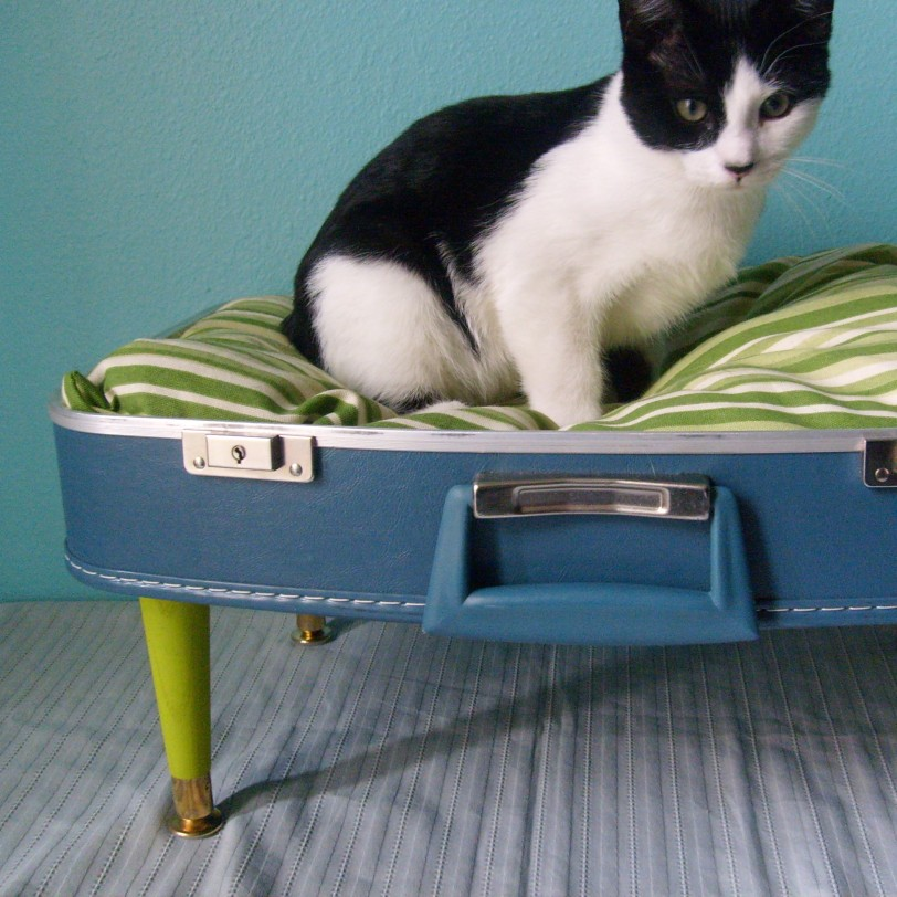 up-cycled suitcase made into a cat bed